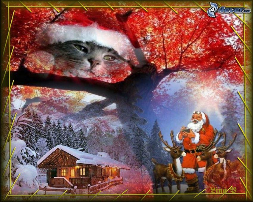 Weihnachten, Weihnachtsmann, weihnachtliches Kätzchen