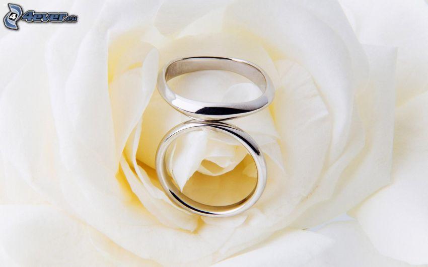 Eheringe, weiße Rosen