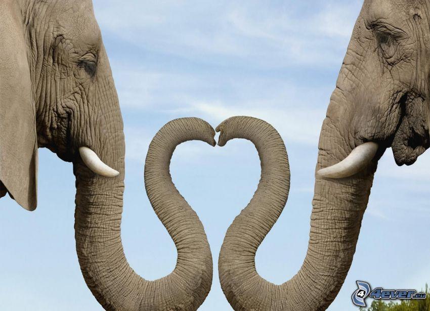 Herz, Rüssel, Elefanten