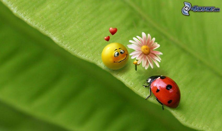 Marienkäfer, Smiley, Gänseblume, Herzen, Liebe, grünes Blatt