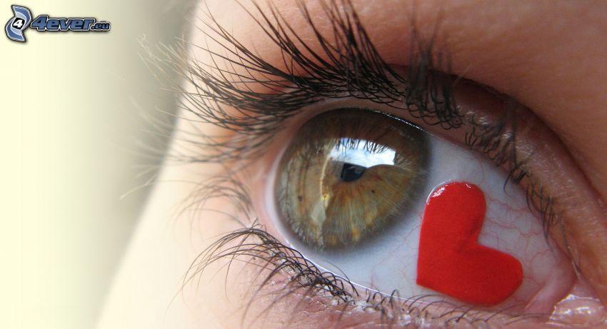 Auge, Herz