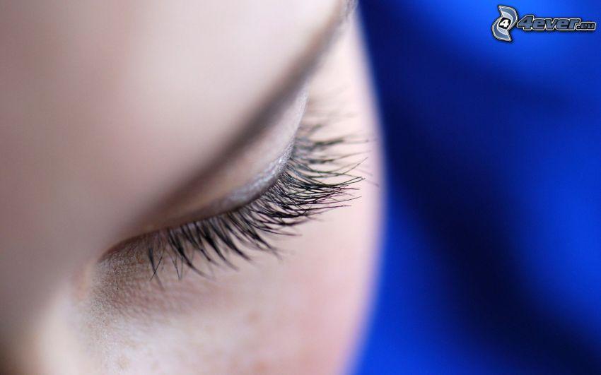 Auge, Wimpern