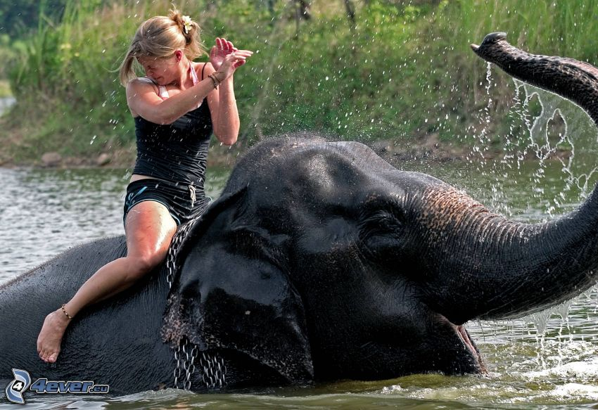 Ausflug auf dem Elefant, Thailand