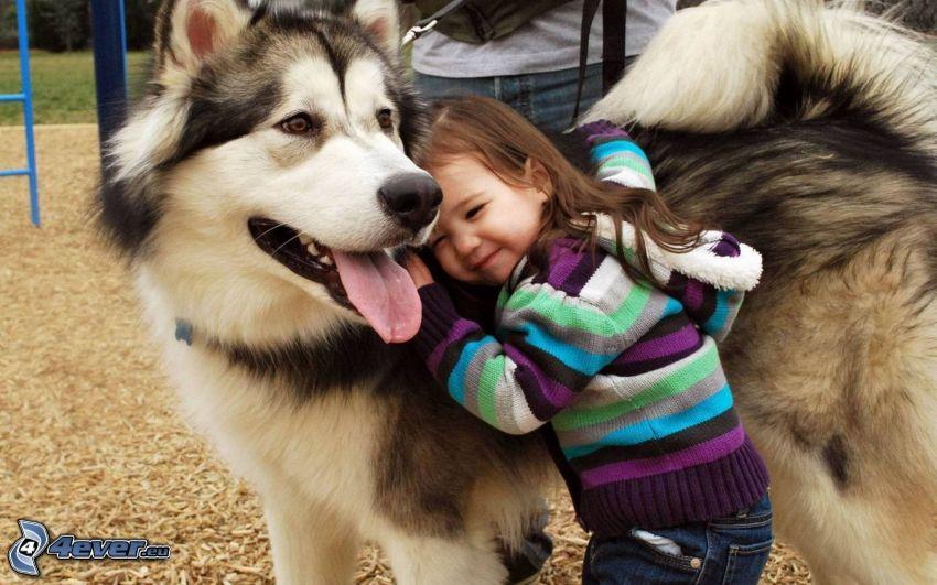 Mädchen, Siberian Husky