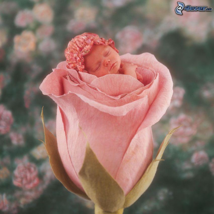 schlafendes Baby, kind in den Blumen, Rose