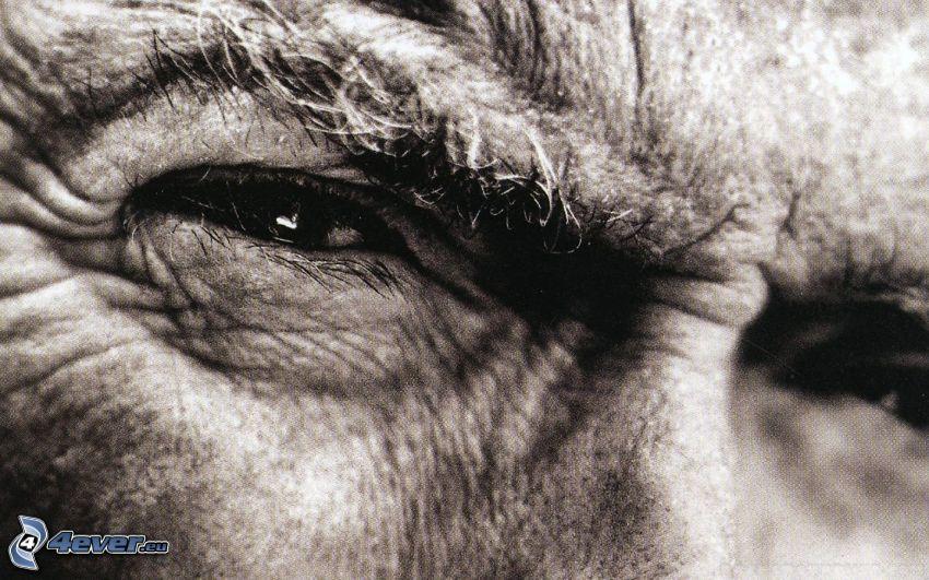 Clint Eastwood, Augen
