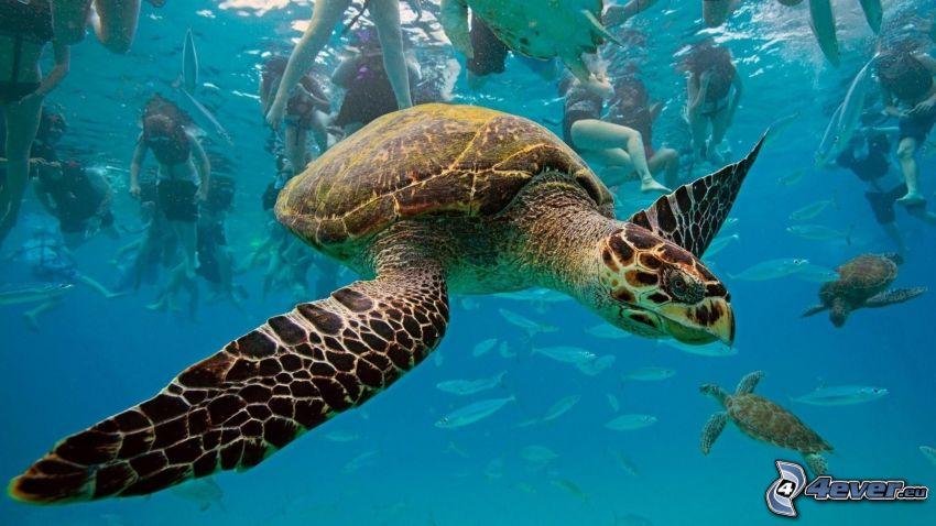 Schildkröten, Menschen, Bad