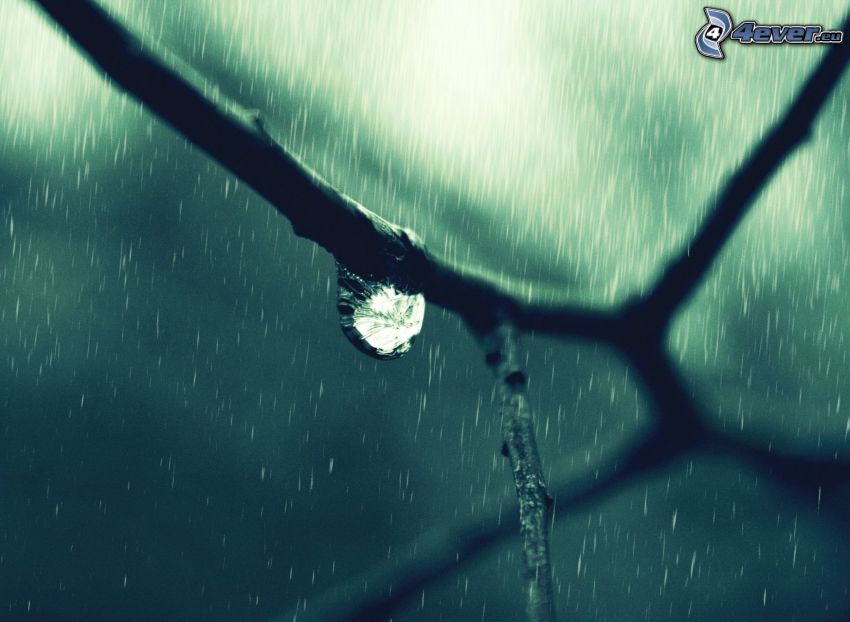 Ast, Tropfen, Regen