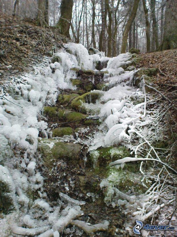Bach, Wildbach, Wald