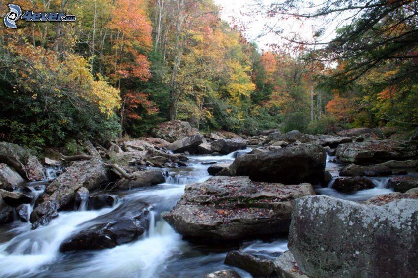Bach im Wald, Fluss, bunter herbstlicher Wald, Felsen