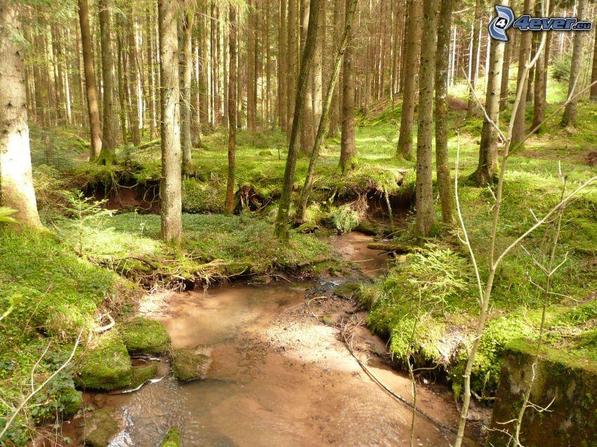 Bach im Wald, Grün