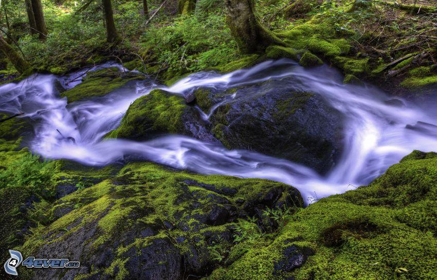 Bach im Wald, Moos, Felsen