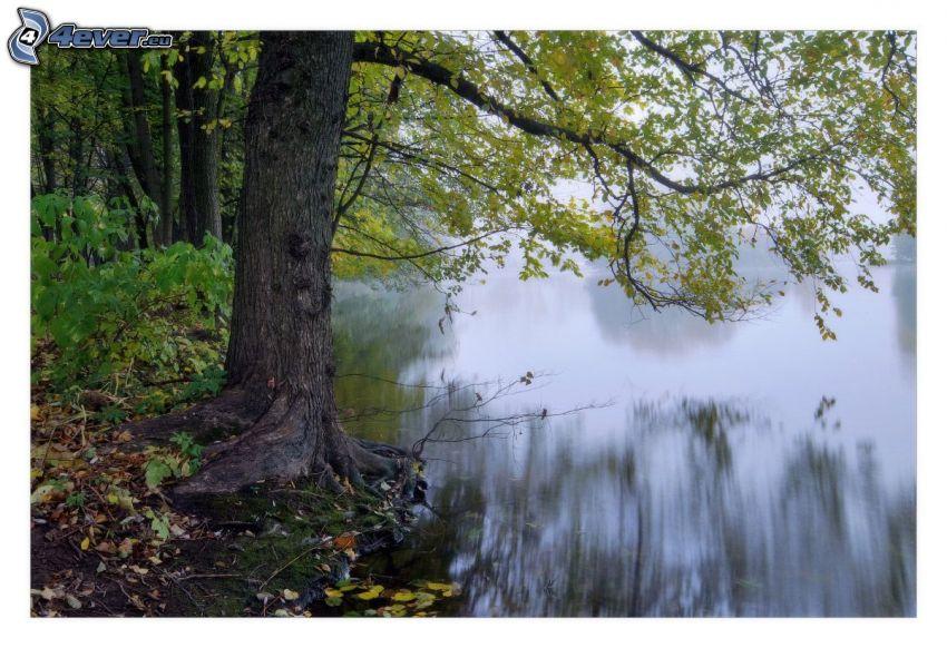 Baum, See im Wald