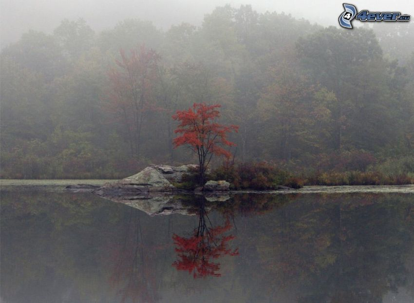 Baum auf dem Felsen, ruhige Wasseroberfläche, See, Nebel im Wald