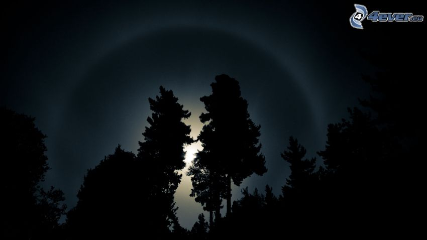 Bäum Silhouetten, Glut, Nacht