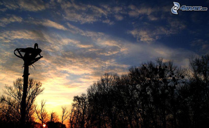 Bäum Silhouetten, Himmel, Storch, Sonnenuntergang