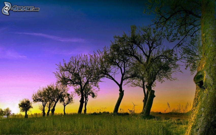 Baumallee, Abendhimmel