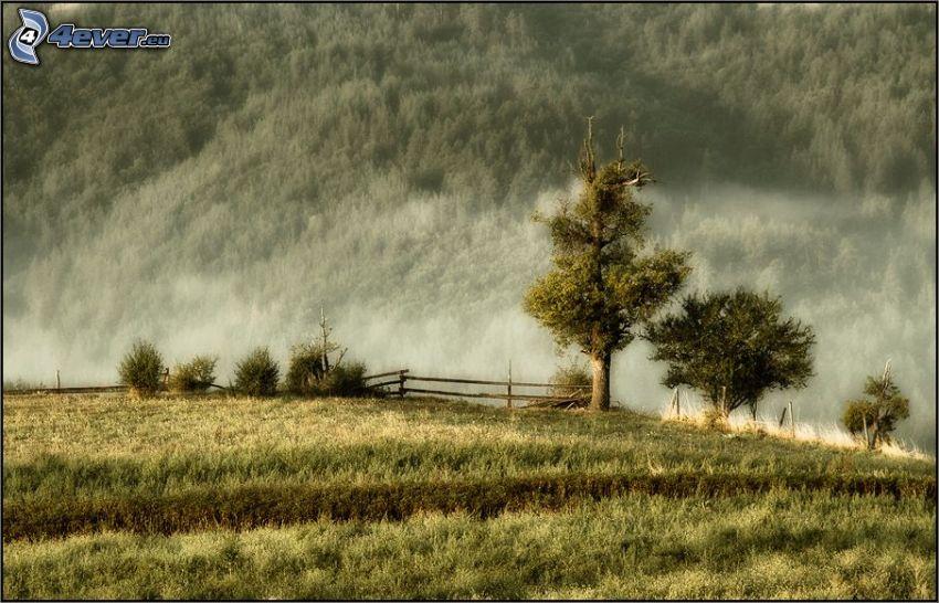Bäume, Boden Nebel