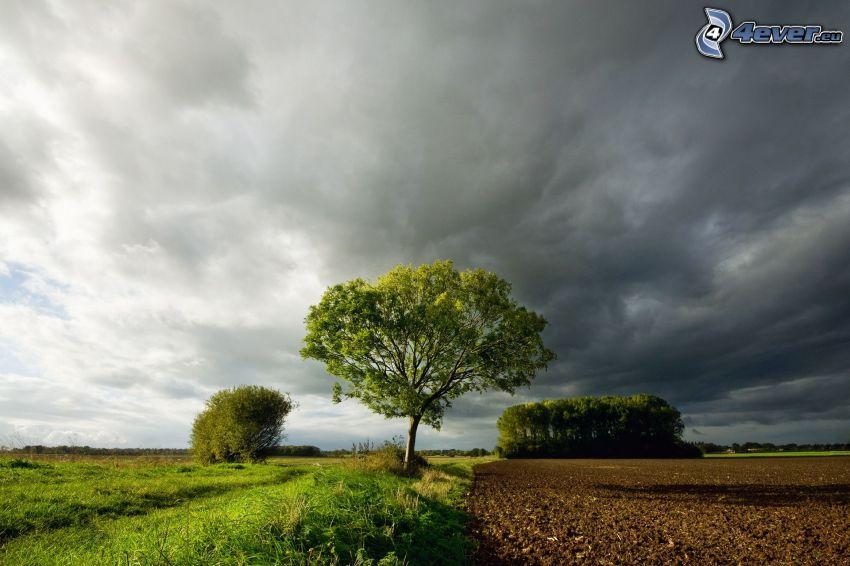 Bäume, Feld, Wolken