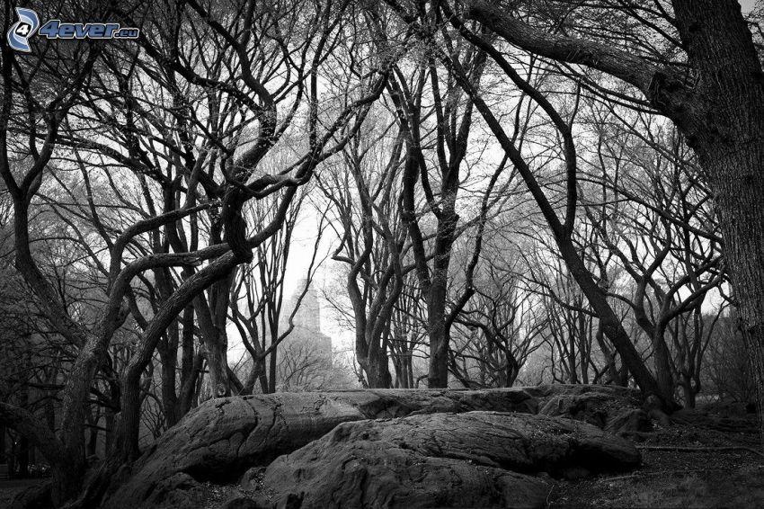 Bäume, Felsen, schwarzweiß