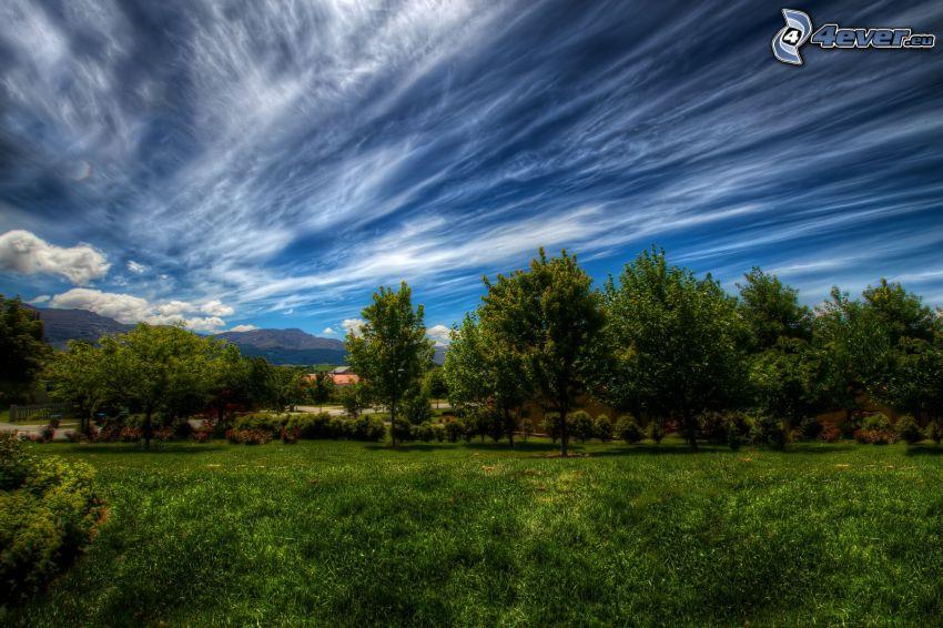 Bäume, Himmel, Wolken, Gras, HDR