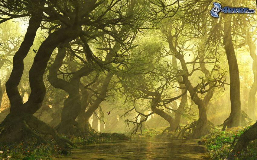 Bäume, Sonnenstrahlen, Fluss