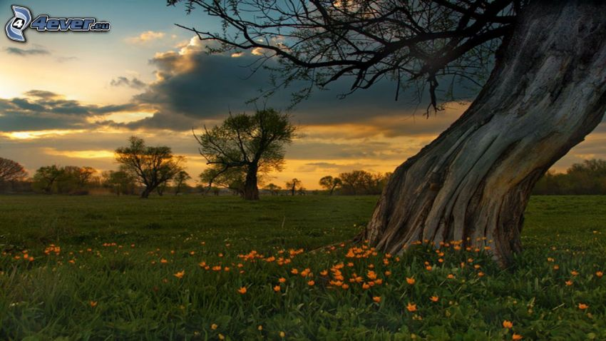 Bäume, Wiese, Abendhimmel