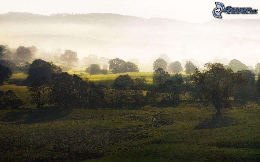 Bäume, Wiese, Boden Nebel