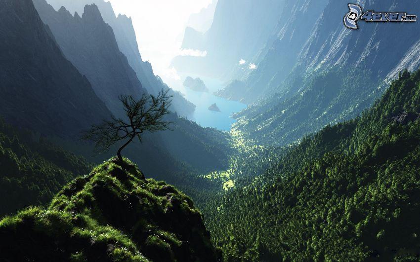 Blick auf das Tal, einsamer Baum, Felsen, Bäume, Tal, felsige Berge