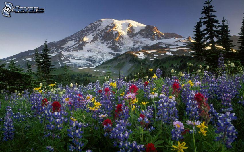 bunte Blumen, verschneiter Berg