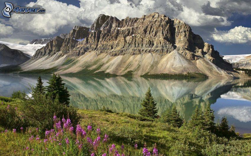 felsiger Berg, See, Spiegelung, Nadelbäume, lila Blumen, Wolken