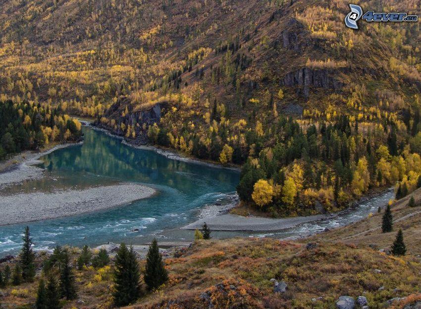 Fluss, Hügel, gelbe Bäume, Nadelbäume