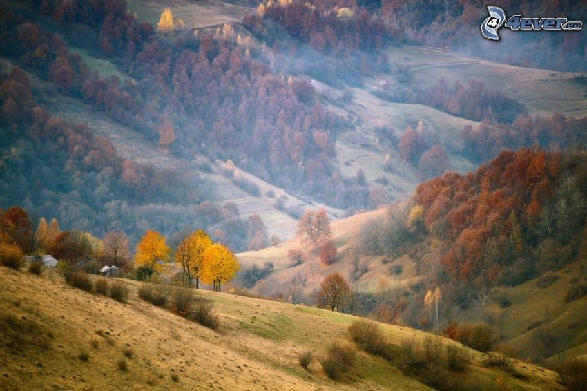 Hügel, bunte herbstiche Bäume