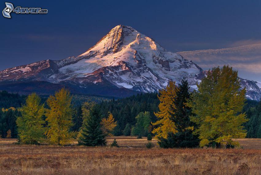 schneebedeckten Berg, felsiger Berg, Wald