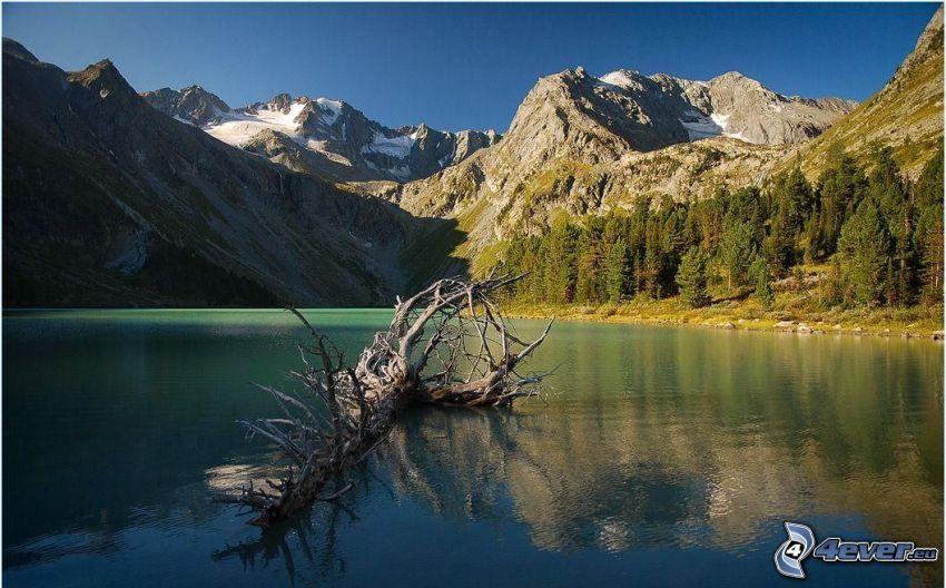trockener Stamm, See, Nadelbäume, schneebedeckte Berge