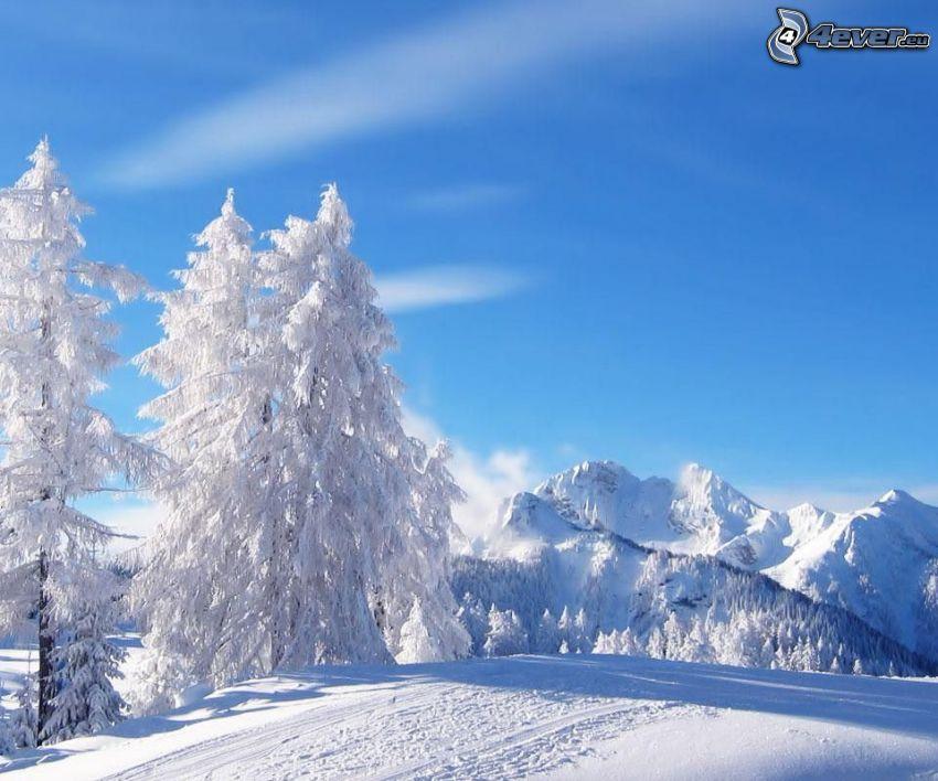 verschneite Bäume, schneebedeckte Berge
