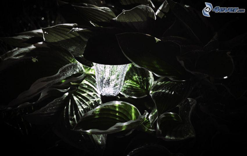 Blätter, Wasser