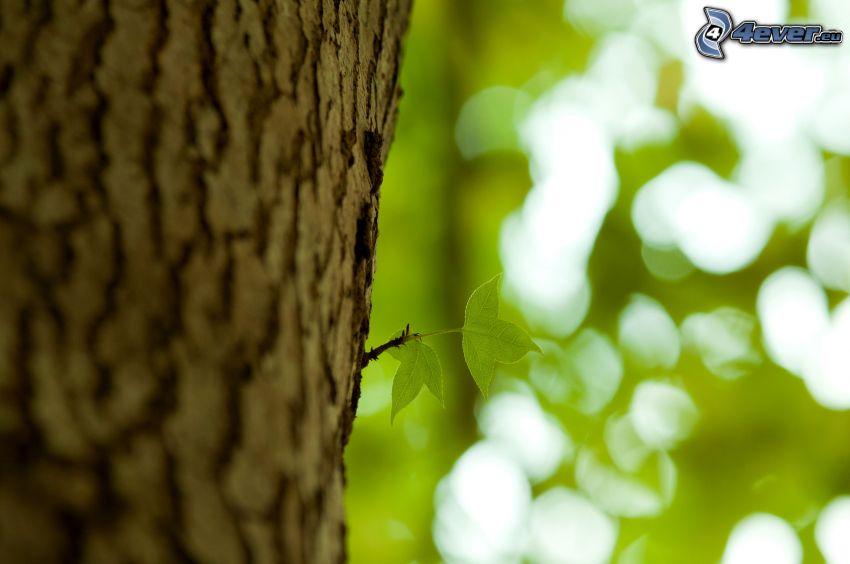 Blätter, Zweig, Stamm