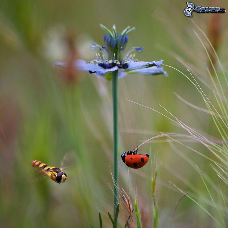 blaue Blume, Marienkäfer, Wespe