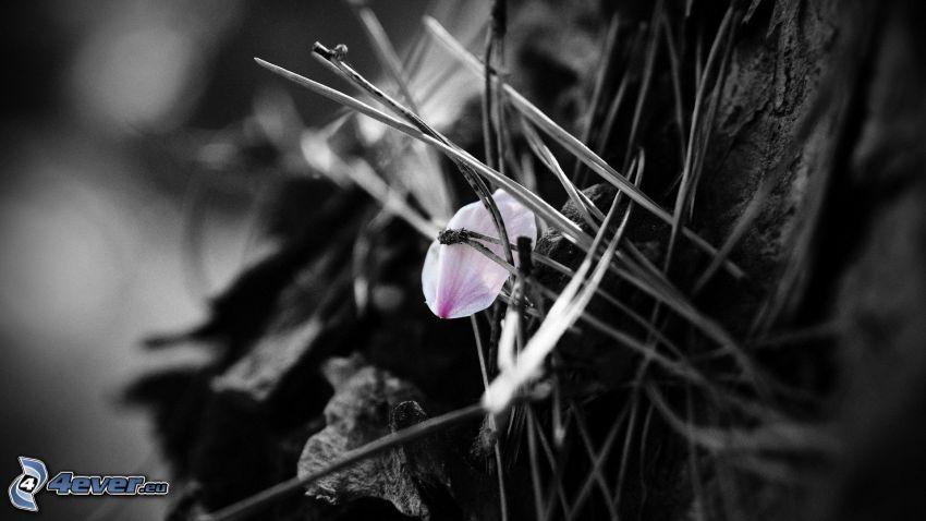 Blütenblatt, Tannennadeln