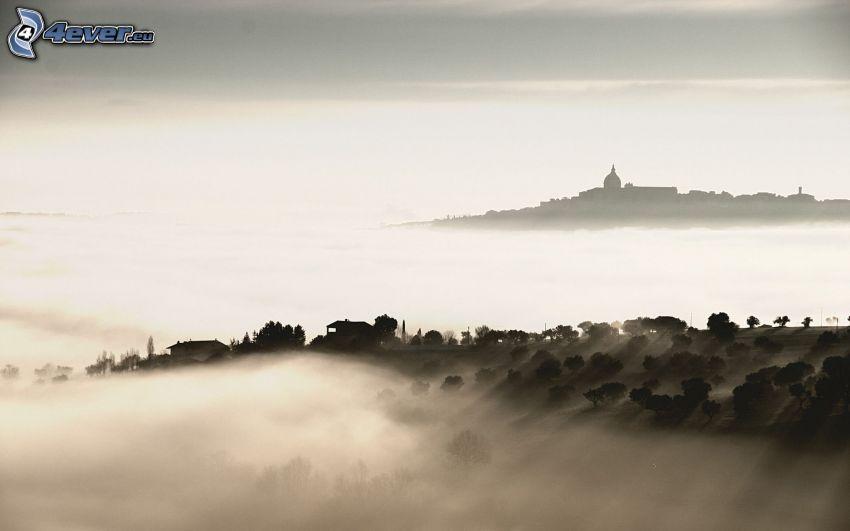 Boden Nebel, Bäume, Schwarzweiß Foto