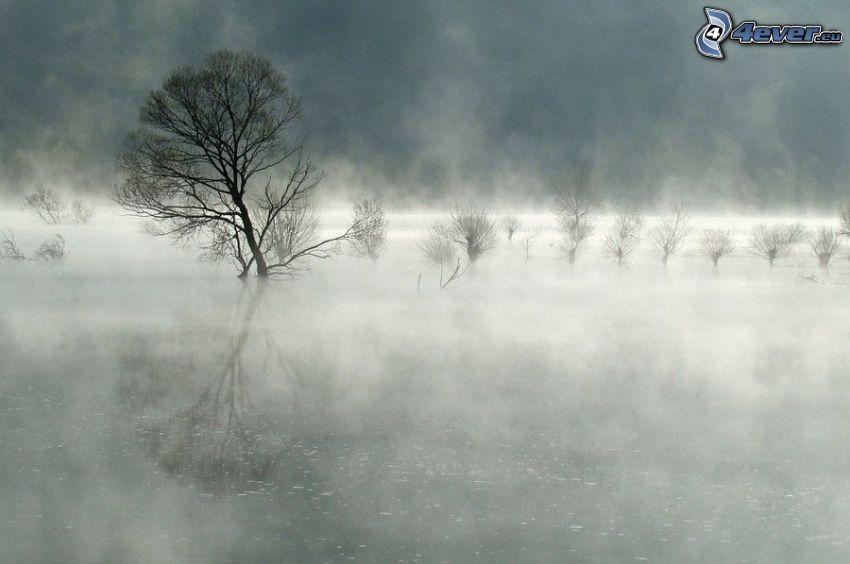 Boden Nebel, Bäume, Wasser