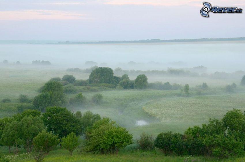 Boden Nebel, Bäume