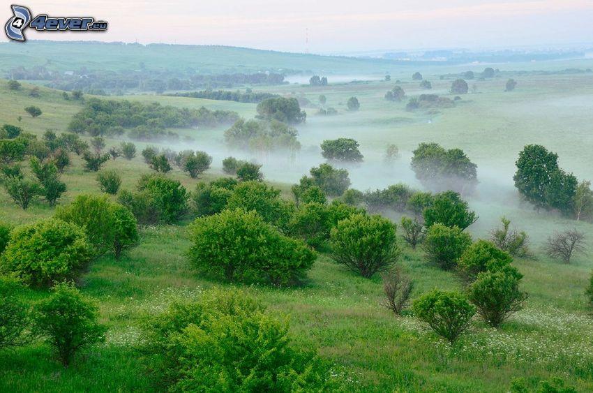 Boden Nebel, Büsche, Grün
