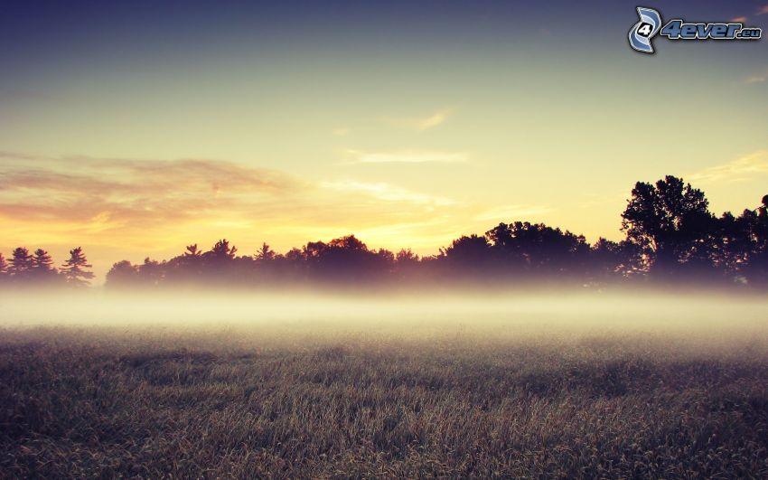 Boden Nebel, Wald, Himmel, Gras