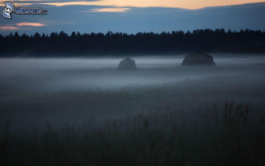 Boden Nebel, Wiese, Wald