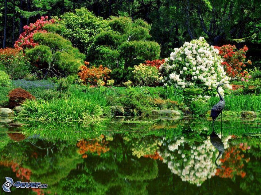 Botanischer Garten, Blumen, Pflanzen, See, Vogel, Spiegelung
