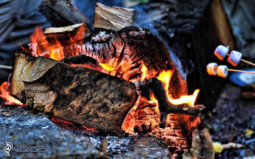 brennendes Holz, heiße Kohlen, Marshmallow