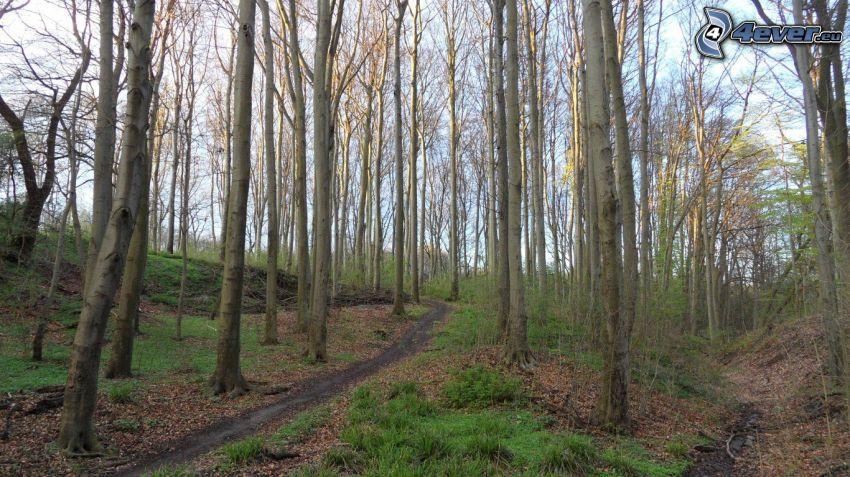 Buchenwald, Waldweg