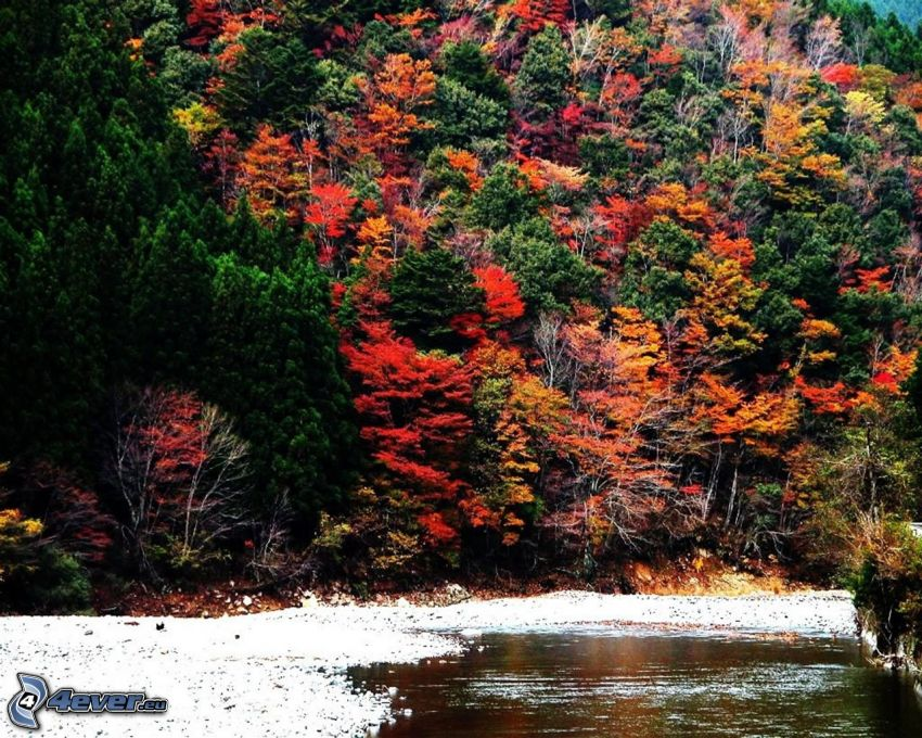 bunte herbstiche Bäume, See, Wald